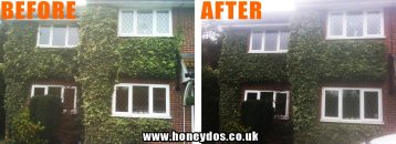 IVY TRIMMING