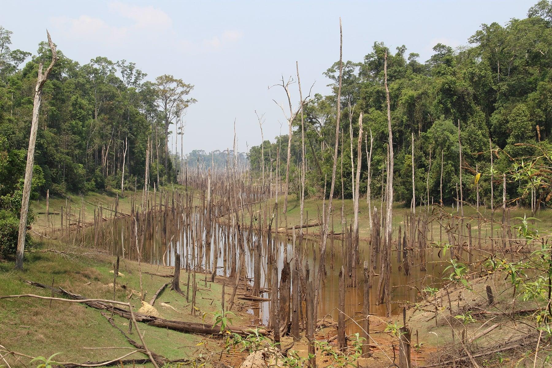 Alcuni alberi morti nel letto di un fiume