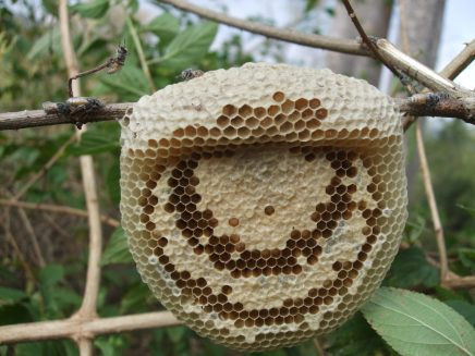 Hive on a branch