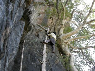 Using bamboo pole to climb towards tree