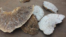 Mushroom NTFP