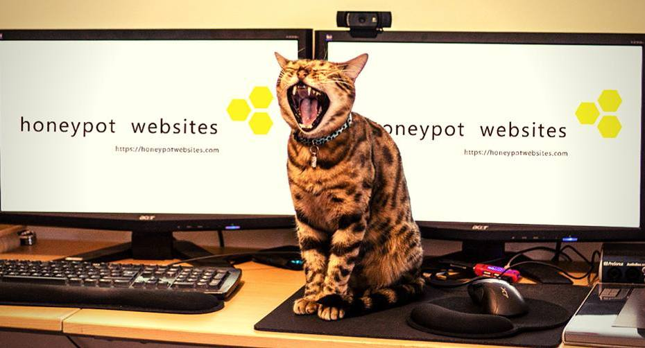 cat in front of computers advertising sale at Honeypot Websites