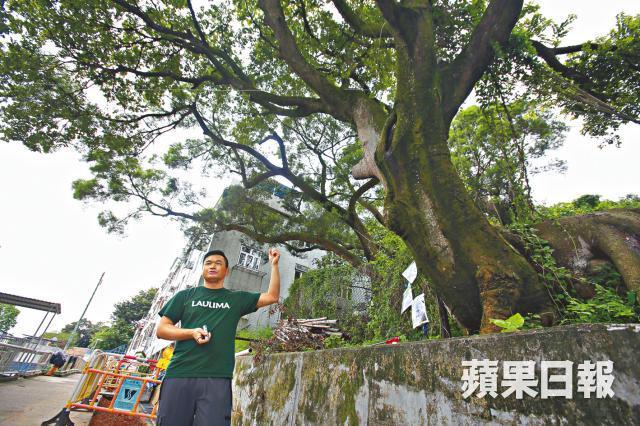 tree, ping chau, apple daily