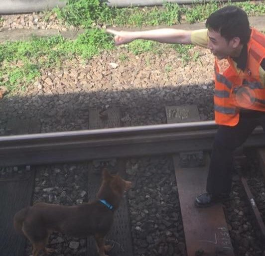 dog on mtr tracks