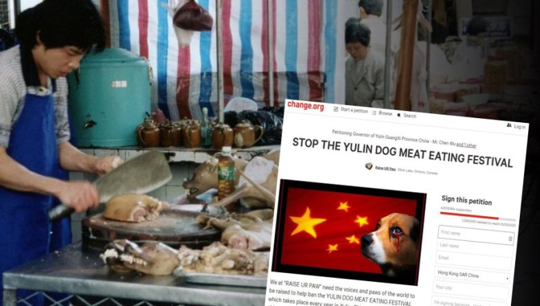 dog meat