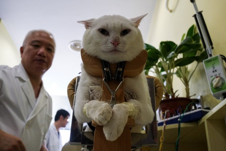 pet medicine china