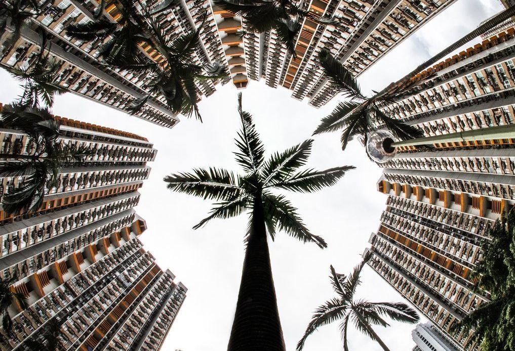 bamboo scenes hong kong Derry Ainsworth - Break of Nature.