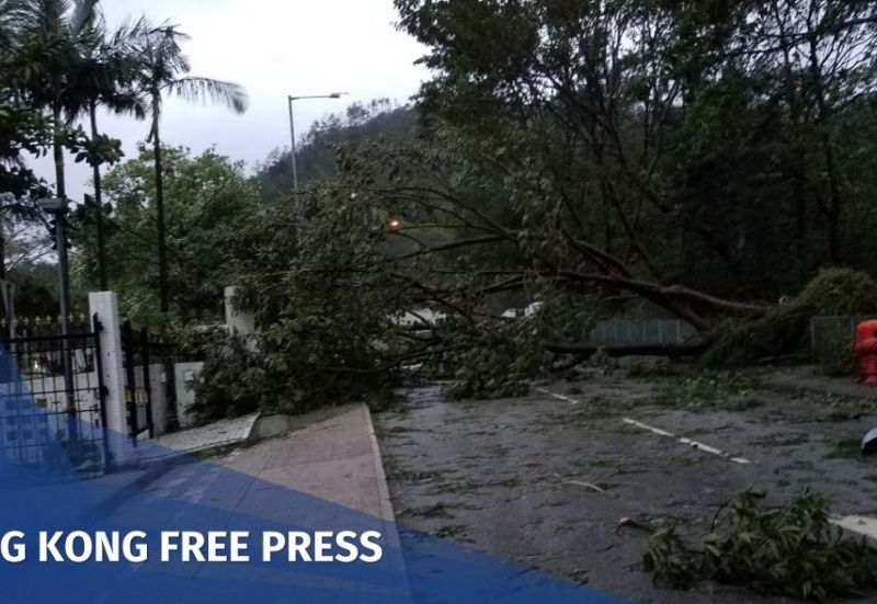 super typhoon tree fell