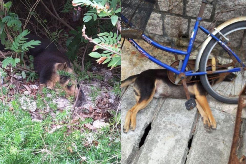 Cheung chau island dog poison