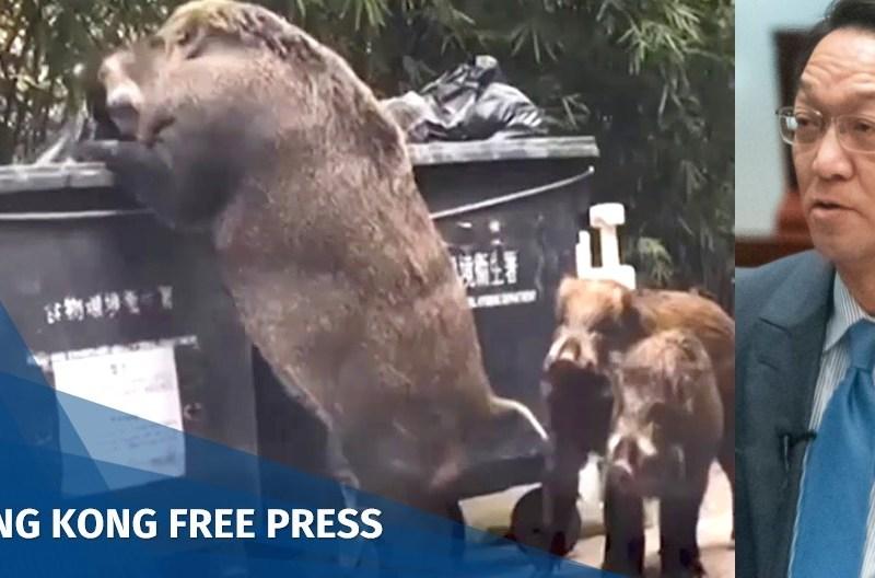 wild boar hong kong