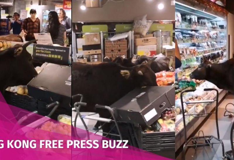 cows lantau parknshop