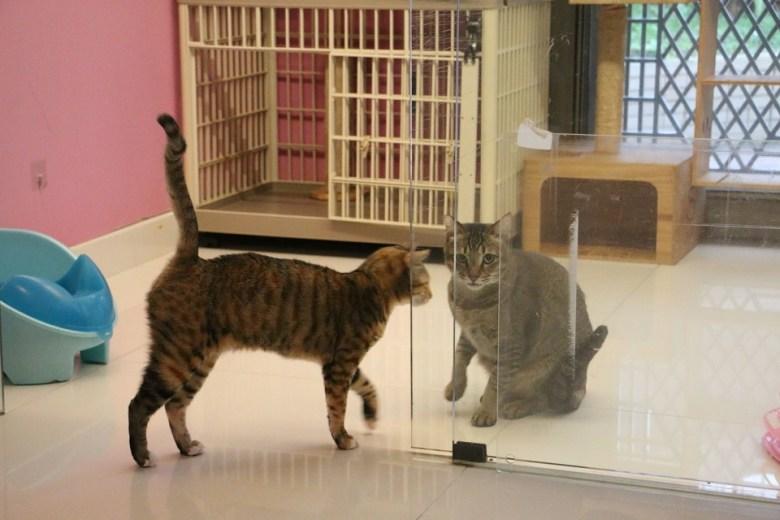 cats homeless stray