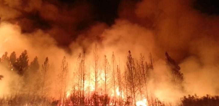 bushfire forest fire