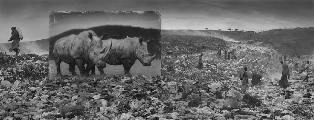 Wasteland with Rhinos Nick Brandt