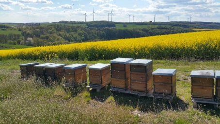 Lebensraum unserer Bienen