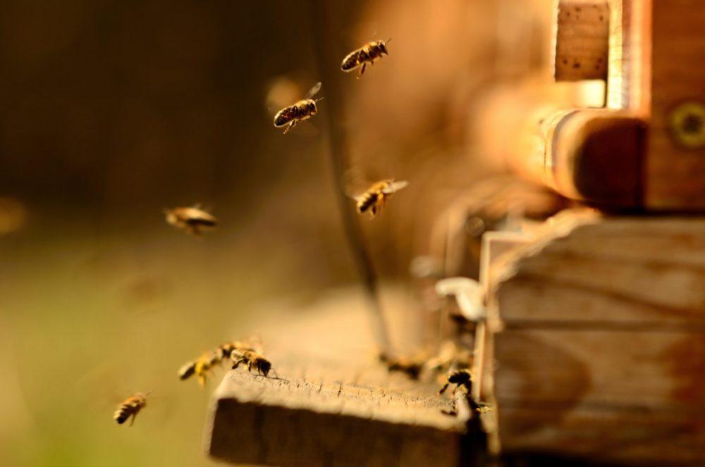 Honigbienen fliegen ihre Stock an