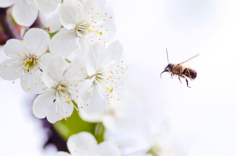 Inhaltsstoffe von Honig