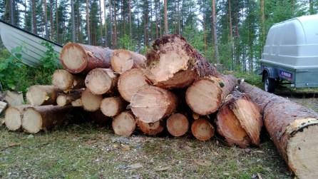 Rakennuspaikat kaadetut puut pinossa, Nokia Lumia 920