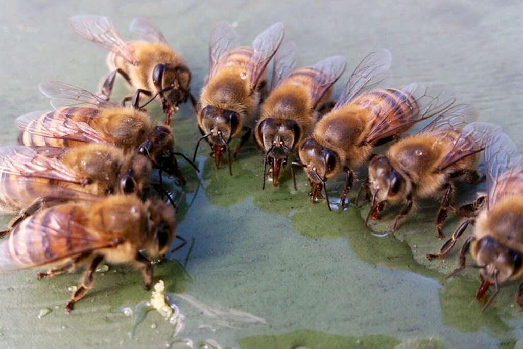 Bier får foder