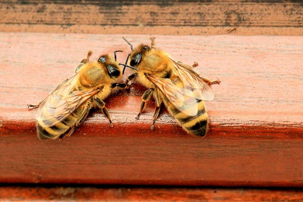 bier i varmen