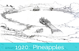 Honokeana Cove History - 1920 Pineapples