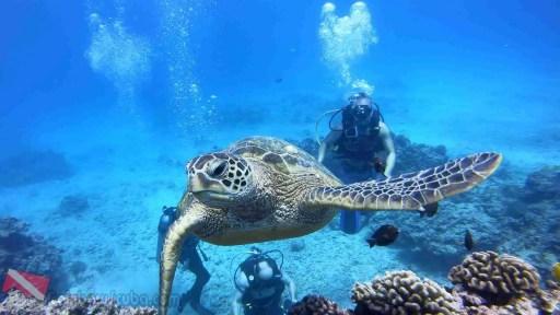 Snorkeling in Honolulu