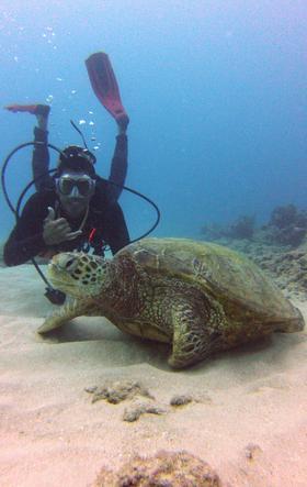 Honolulu Honu Divers