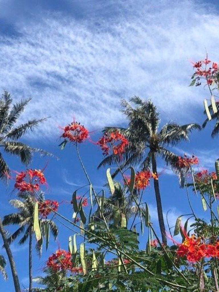 Honolulu Myohoji