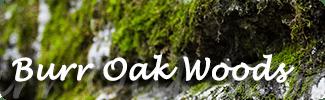 Burr Oak Woods