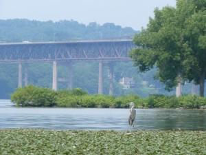 Heron on Hudson