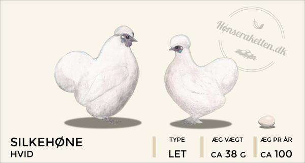 Silkehøns