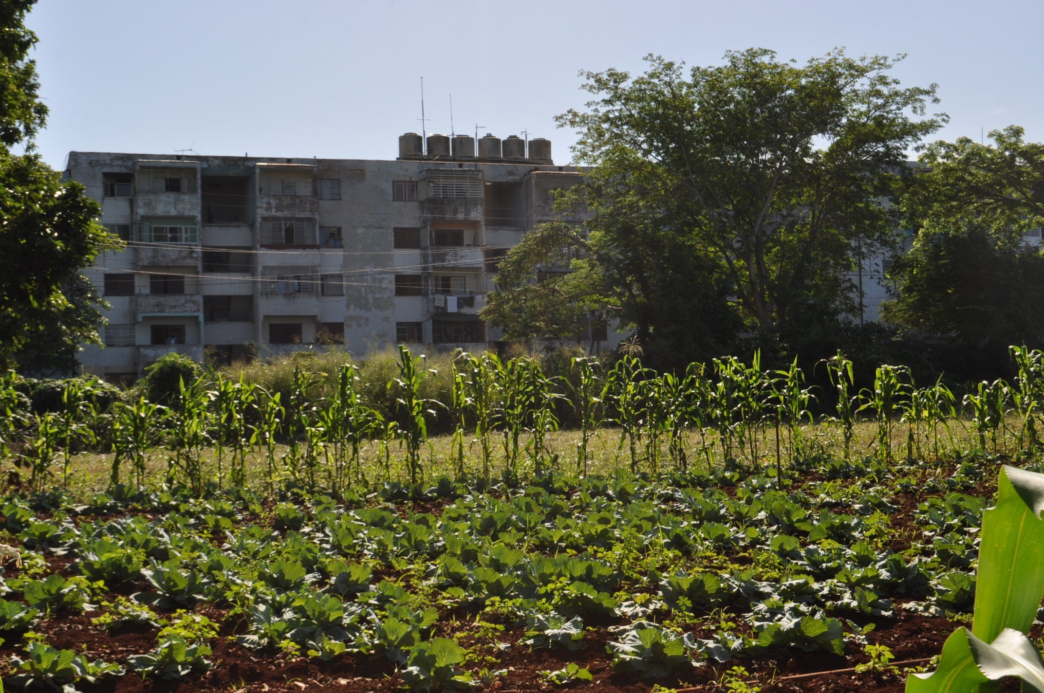 Urban design and agriculture in Cuba