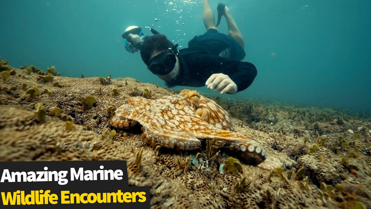 15 Incredible Marine Wildlife Encounters | Amazing Ocean Life