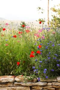 landscaping-consultation