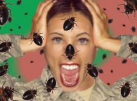 bed bug women body