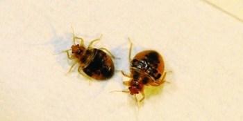 bug-fly