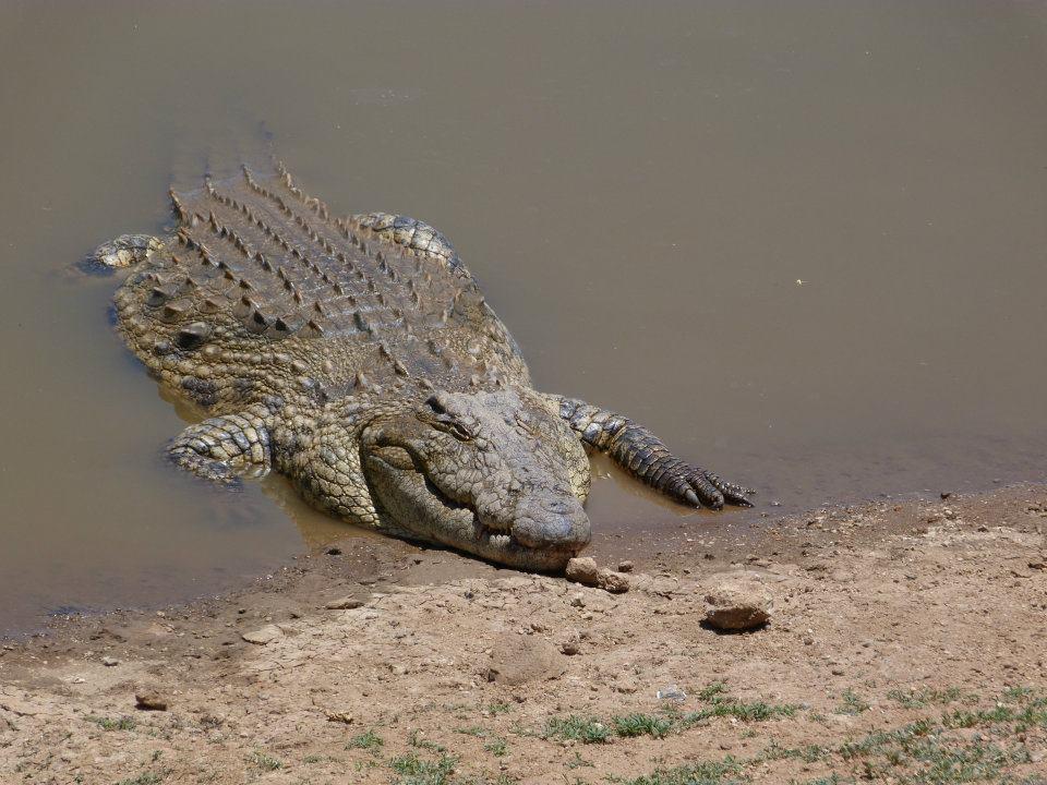 namibie-2011-www-hoogstinstravel-nl_8