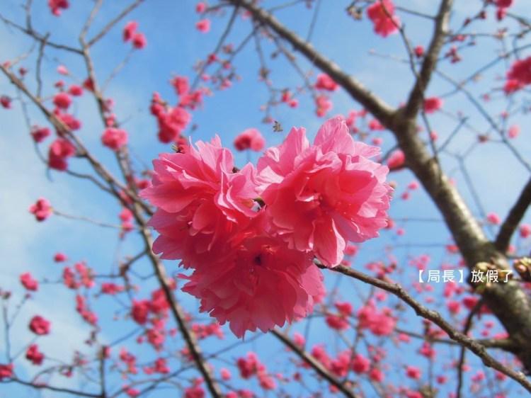 【二十四節氣】春分@講求「平和」,以和為貴,陰陽平衡,是此時節氣的養生特點。