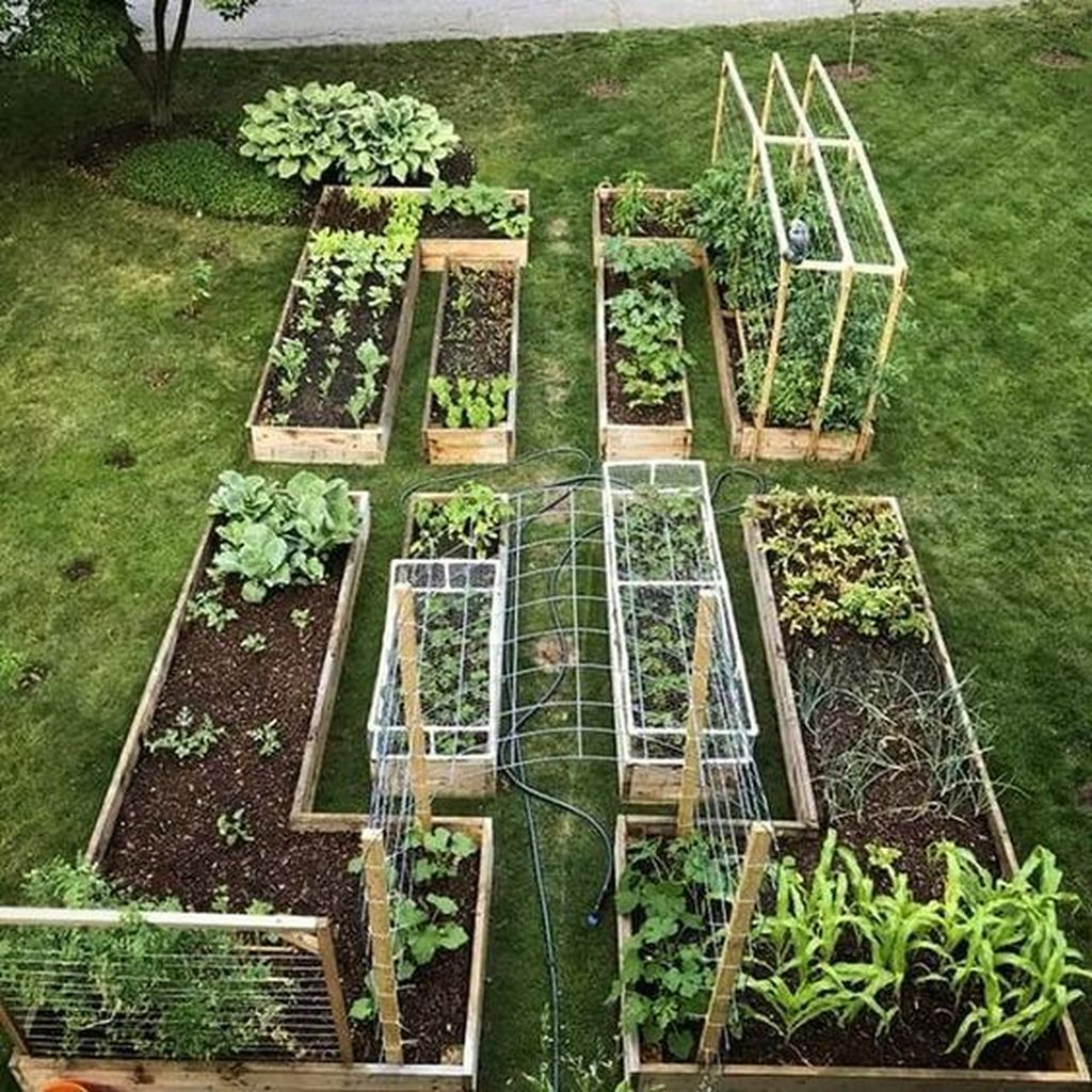 Inspiring Veggies Garden Layout For Your Outdoor Ideas 20