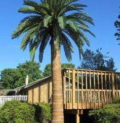 Outdoor Artificial Palm Trees