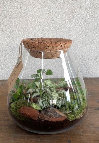 Biosféra rastliny v skle