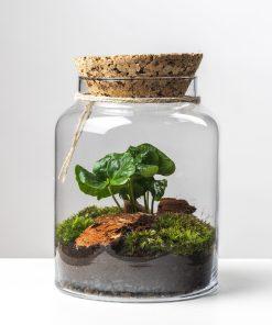 Biosféra – rastliny v skle 002