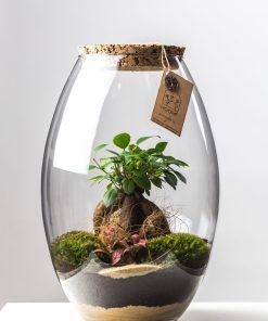 Biosféra – rastliny v skle 009