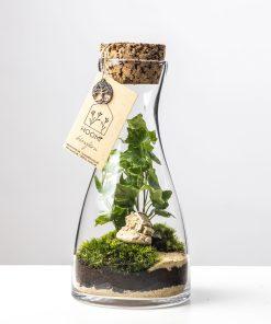 Biosféra - rastliny v skle 024