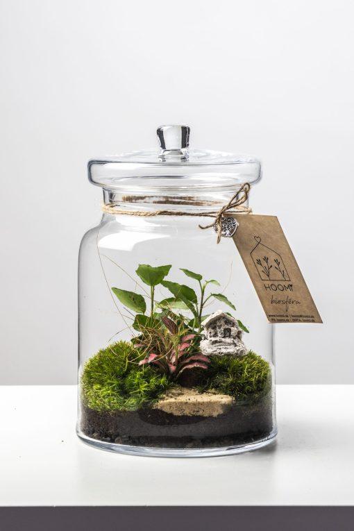 Biosféra - rastlinné terárium 025