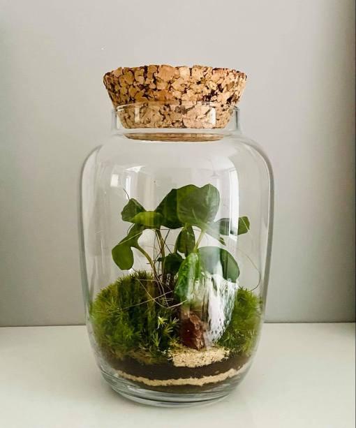Biosféra - rastlinné terárium 030