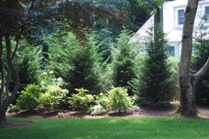 Awesome Fence With Evergreen Plants Landscaping Ideas 103