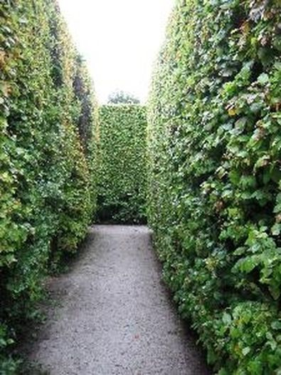 Awesome Fence With Evergreen Plants Landscaping Ideas 14