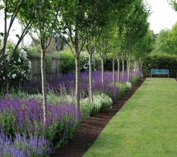 Awesome Fence With Evergreen Plants Landscaping Ideas 25