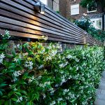 Awesome Fence With Evergreen Plants Landscaping Ideas 3